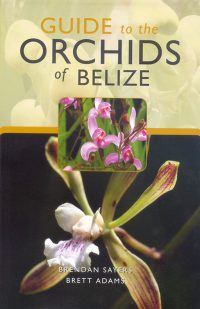 Guide to the Orchids of Belize